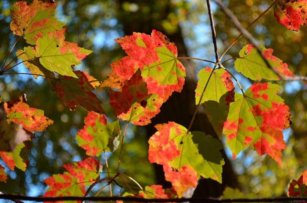 2012-10-16backyard13.jpg