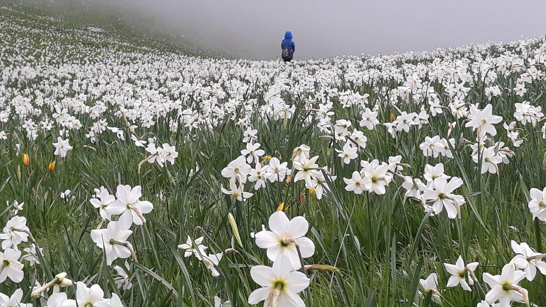 fioritura sul Monte Corce