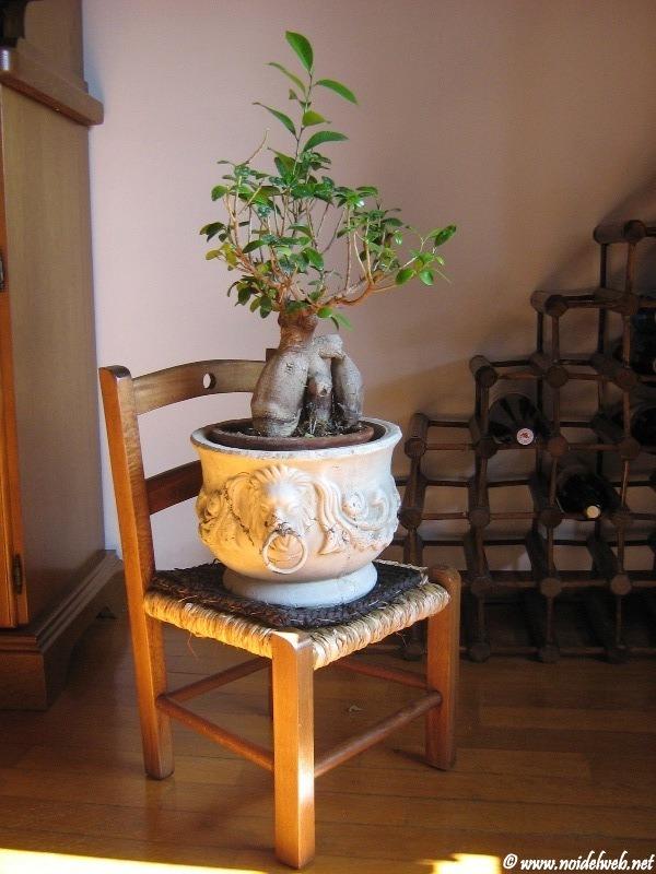 bonsai10.jpg