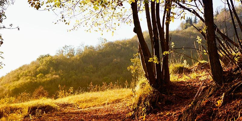 Golden_autumn_Val_Seriana_Bergamo_Mat_B.jpg