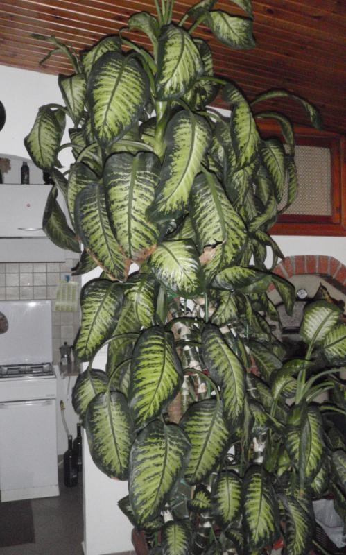 Piante d piante d with piante d pianta da verde duylinh for Pianta da pavimento verde