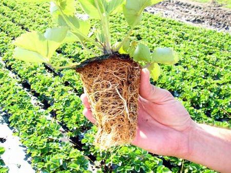 trapiantare-piante.jpg